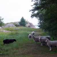 12 b lampaat luonnossa