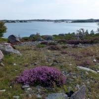 12 saaren unikki kasvisto